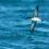 Devenez sentinelles de la mer avec la LPO en région Occitanie